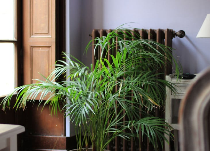 cantinot-IMG_6641-730x526